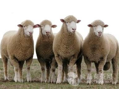 羊的身体结构名称图片