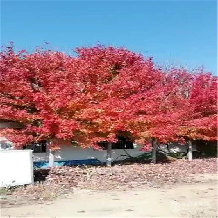 大新的樱花谷风景区