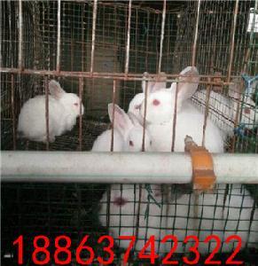 今年养殖肉兔赚钱吗