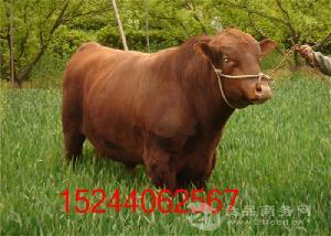 浙江大型养牛基地