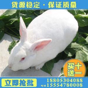 养100肉兔需要多少钱