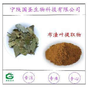 布渣叶提取物 布渣叶粉 药食同源 OEM代工 代用茶  欢迎订购