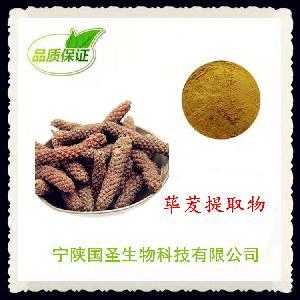 荜茇提取物 荜茇粉 药食同源原料 热销产品 欢迎订购