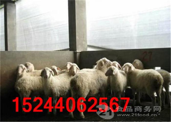 全国出售湖羊