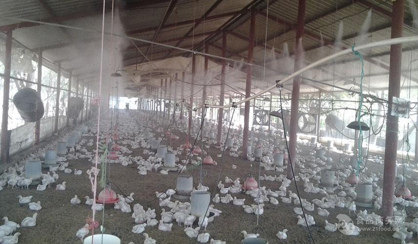 养殖场喷雾加湿设备效果