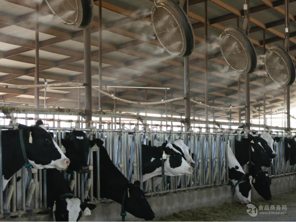 养殖场喷雾加湿器生产厂家