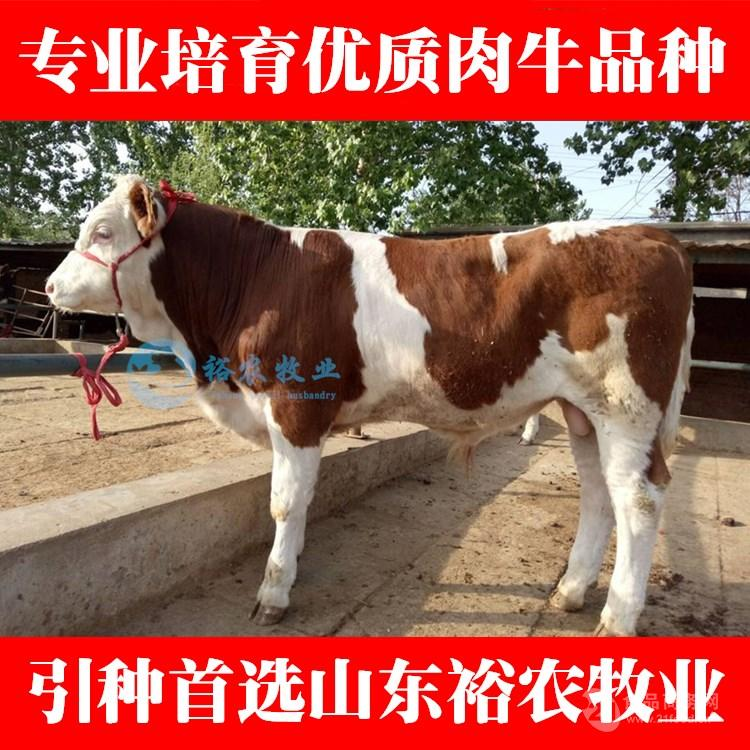 养10头牛犊一年的利润