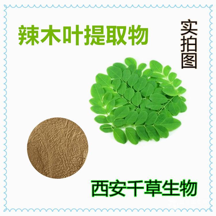 辣木叶提取物 辣木叶浓缩粉 辣木叶浸膏粉生产