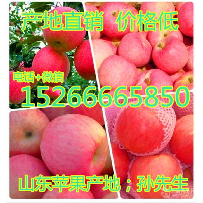 山东红富士苹果批发多少钱一斤 苹果产地 红富士苹果