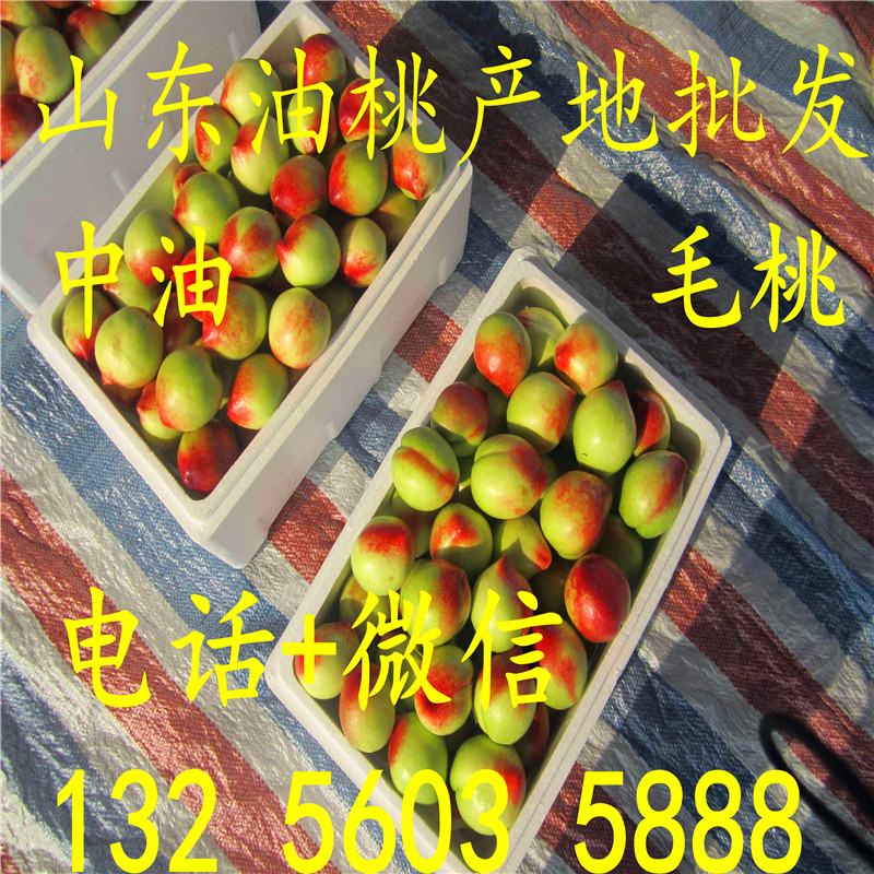 油桃产地在那 山东莒县大棚油桃上市了