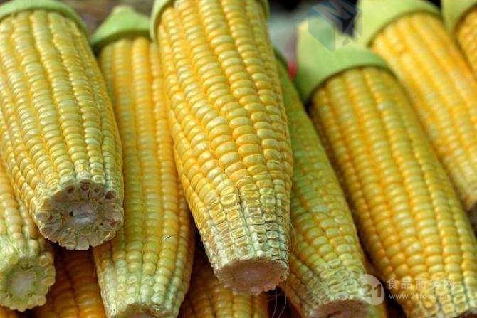 广西甜玉米清洗机  滚杠式玉米清洗流水线设备