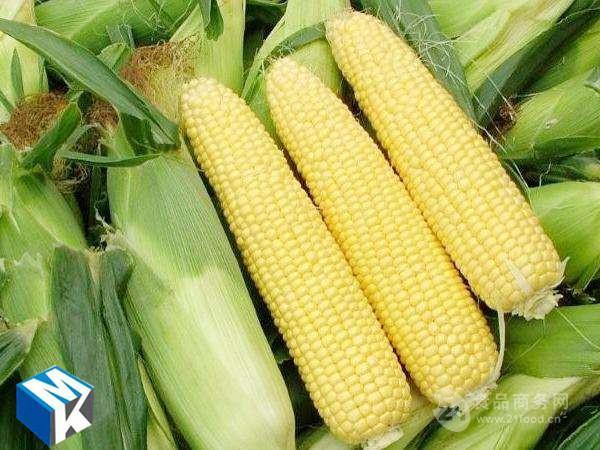 厂家直销鲜玉米清洗机  滚杠式玉米清洗机设备