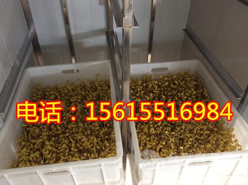 供应浙江自动豆芽机,全自動豆芽機厂家哪家好