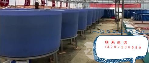 南美白对虾大棚一年养6批成功养殖示范基地