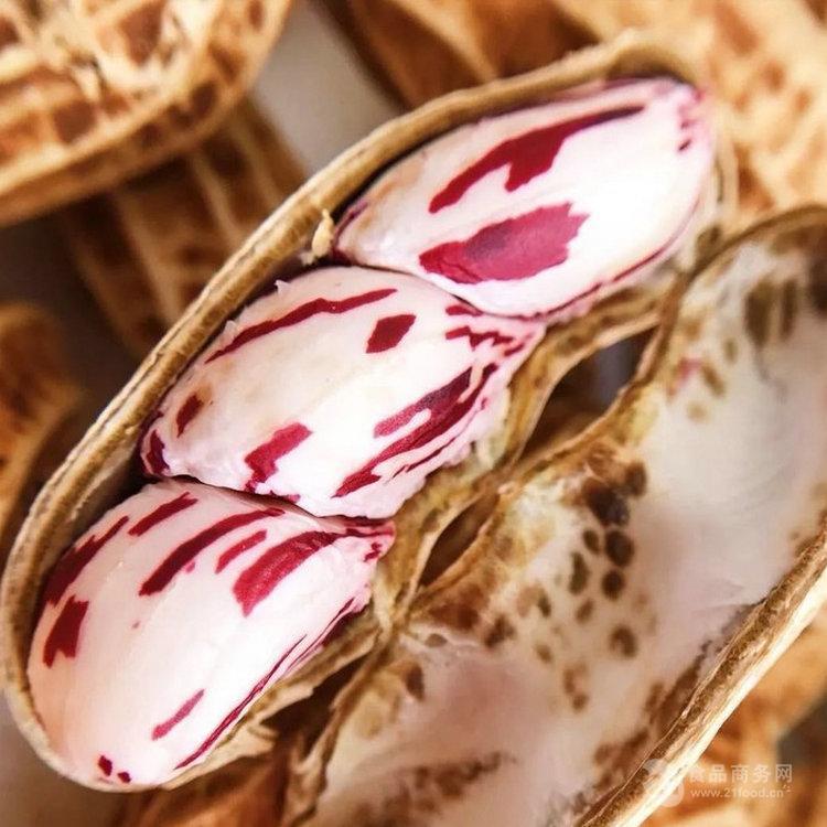 彝山香常年批发云南特产七彩花生农家原味 带壳新鲜湿花生预售