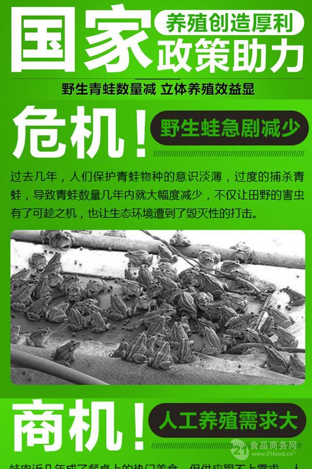 青蛙养殖过程中如何提高青蛙蛙肉品质