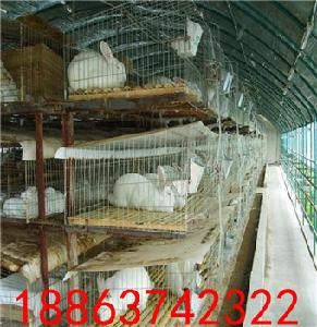肉兔养殖技术兔子种兔价格