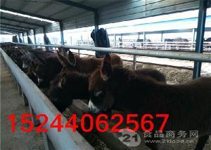 中国哪里出售肉驴
