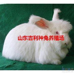 3斤的野兔子多少钱一只