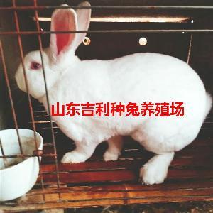 合作社有没有兔子