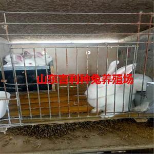野兔养殖环境