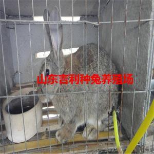 山东大兔子养殖场