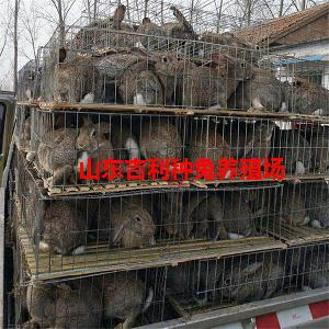肉兔养殖场