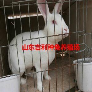 养500只兔子一年利润