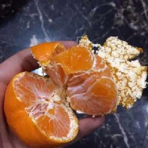 批發正宗臺州臨海涌泉蜜桔一件代發貨源產地