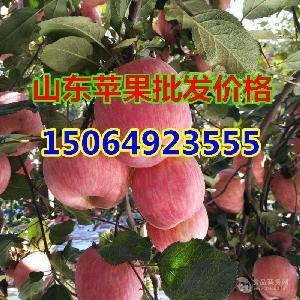 山东红富士苹果今日价格,山东富士苹果产地