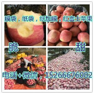 今日优质水晶红富士苹果批发价格