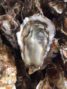 山东牡蛎蒜蓉生蚝的做法