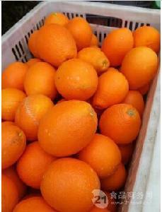 湖北脐橙批发产地哪里