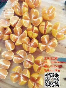 正宗廉江紅橙1斤|13414966066李生