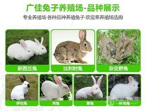 江苏肉兔种兔养殖场