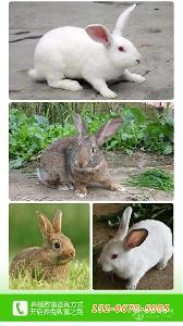 江西肉兔養殖場
