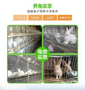 河南哪里有卖肉兔种兔的
