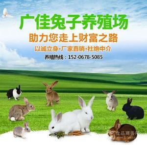 江西哪里有卖肉兔种兔的