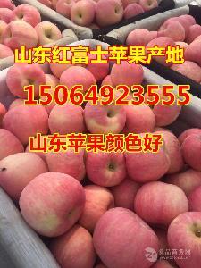 山东苹果价格,今日红富士苹果报价