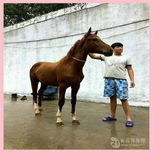 白色矮马出售2000元