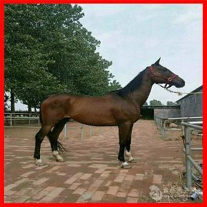 小矮马多少钱一匹