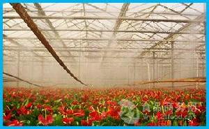 养殖大棚加湿器