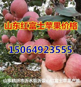 2020年山东省红富士苹果价格
