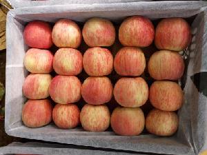 山東省蘋果價格