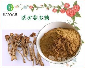茶树菇多糖50% 茶树菇提取物 现货 厂家供应