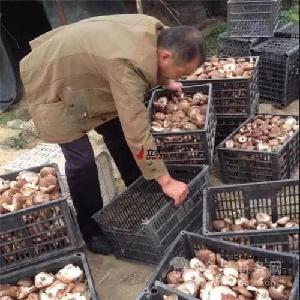 香菇干燥用什么机设备好 空气能热泵