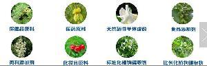 新疆大鲍鱼果粉多糖沙漠果粉固体饮料酵素粉浓缩汁粉速溶粉