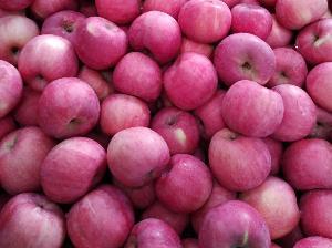 紅富士蘋果產地價格