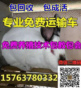 杂交野兔的价格多少钱
