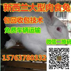兔子养殖成本利润分析